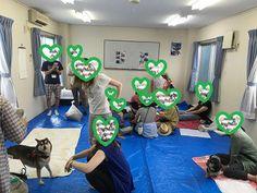 里親さんブログラダック主催(第47回犬&第46回猫)定例里親会 - http://iyaiya.jp/cat/archives/78975