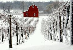 Red barn in the snow⛄️