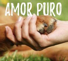 INCONDICIONAL! ❤️❤️ #cachorro #gato #filhode4patas #filhote #maedepet #paidepet #petmeupet #petshop #amoanimais