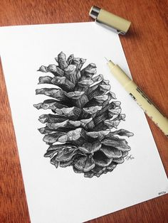 Image result for simple line drawing of a pine cone