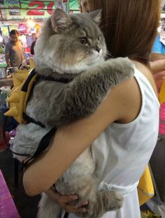 Meet Bone Bone, The Enormous Fluffy Cat From Thailand That Everyone Asks To Take A Picture With - Cats - Katzen Cute Kittens, Cats And Kittens, Kitty Cats, Siamese Cats, Cute Fat Cats, Cats Meowing, Animals And Pets, Baby Animals, Funny Animals
