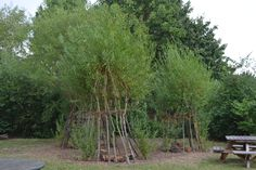 Willow dens