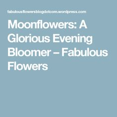 Moonflowers: A Glorious Evening Bloomer – Fabulous Flowers