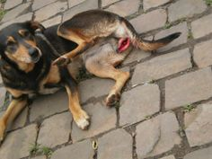 On 18th of September 2012, the dog in the picture was brutally raped in the bathroom of a gas station in Brazil. wordpress.com . .There are men who are passing as human beings, but they're actually the lowest scum from hell.
