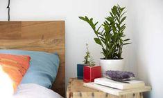 Ezt az 5 növényt szerezd be a hálószobádba, és meglepő dologban lesz részed!