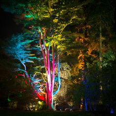 The Enchanted Christmas at Westonbirt Arboretum