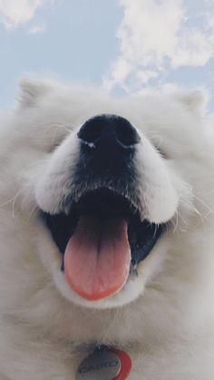 Sorrisão♡