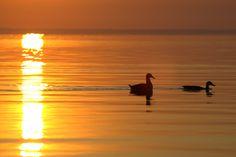 Zelovits Gábor A hajnal      Mindenhol felbukkan, helytől s vidéktől függetlenül     indítja napunkat,elképzeléseinket, látomásainkat     színei, fényei nem mindenhol egyformák,de látványa     az emberi léleknek valami oly szépet ád, mi gondolatot     s emlékeket életre kelt,szinte észrevétlen. Több kép Gábortól: www.facebook.com/gzelovits Celestial, Facebook, Sunset, Outdoor, Outdoors, Sunsets, Outdoor Games, The Great Outdoors, The Sunset
