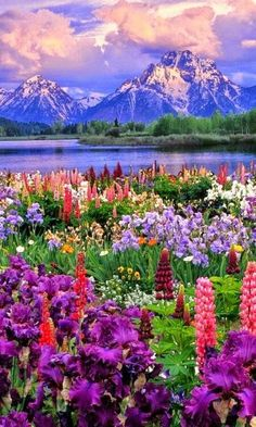colorful places and landscapes in the world. To brighten your day, here are some of the most colorful places and landscapes across the globe, each delightfully vibrant in its own unique way. Grand Teton National Park, National Parks, Fun Summer Activities, Forest Path, The Plan, Spring Nature, Nature Nature, Nature Crafts, Imagines