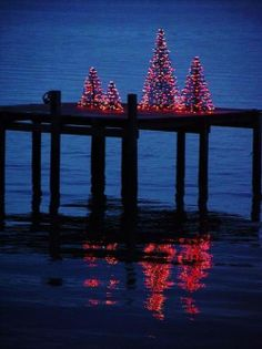 Christmas trees on the dock of the bay.