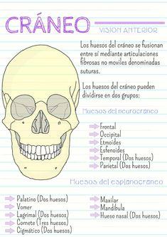 Medicine Notes, Medicine Student, Med Student, Student Studying, Studying Medicine, Medical Anatomy, Bullet Journal School, Nursing Notes, School Essentials