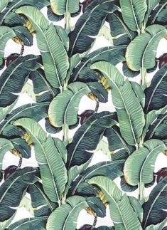 Blanche Devereaux's bedroom wallpaper--banana plant...