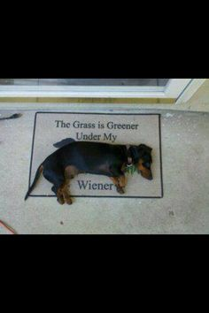 The grass is greener under my weiner...dog