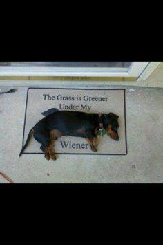 The grass is greener under my weiner :-)