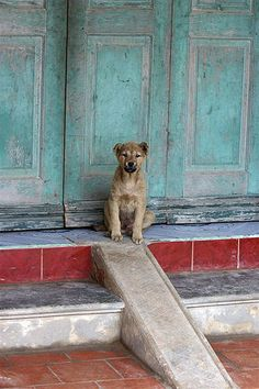 Little Guard Dog by Gibtach, via Flickr