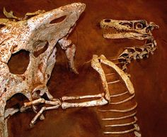 Velociraptor Facts for Kids - Interesting Dinosaur Information Velociraptor Dinosaur, Dinosaur Information, Dinosaur Pictures, Dinosaur Images, Dinosaur Skeleton, Dinosaur Fossils, Dinosaur Bones, Facts For Kids, Witches