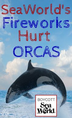 Learn how SeaWorld's fireworks displays harm their orcas. Info at the link.