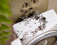 En nuestro blog encontrarás algunos consejos para alejar los insectos de tu casa. ¡Chécalos!