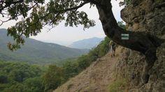 Spartacus-ösvény, Apát-kúti-völgy » KirándulásTippek Spartacus, Country Roads, Mountains, Nature, Travel, Viajes, Naturaleza, Destinations, Traveling