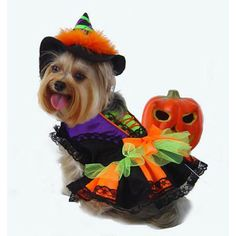 Puppe Love Halloween Witch Dog Costume | Wayfair