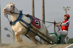 ばんえい競馬にも白毛馬が!