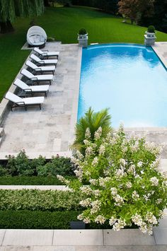 pristine pool, gorgeous lawn, love white crepe myrtles, very inviting