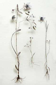 Anne Ten Donkelaar; Flower constructions