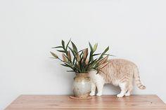 采花大猫 | Aya Gao | Flickr