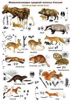 следы Zootopia, Rare Albino Animals, Animal Footprints, Deer Hunting Tips, Animal Tracks, Group Of Dogs, Animal Posters, Animal Sketches, Camping And Hiking