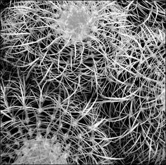 Cactus1 by Janette JKay Borland   Flootie.com
