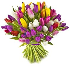 """Tulips and What Flowers Mean - """"Pink tulips represent caring, while purple mean royalty, as with purple roses. Red tulips mean love, white forgiveness, and yellow ones tell the recipient that you're head over heels for them."""