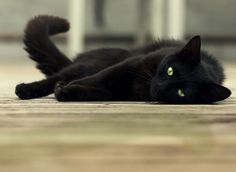 August is National Black Cat Appreciation Day {This is too funny! My kitten, Lylah's birthday is August and she's a black cat So cute! Animal Gato, Mundo Animal, Crazy Cat Lady, Crazy Cats, National Black Cat Day, Black Cat Appreciation Day, Cat Facts, Beautiful Cats, Cool Cats