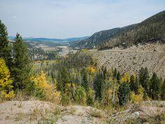 Gold Trees Sept.23, 2012  :    DSCN3993