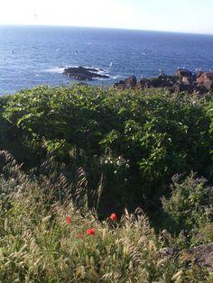 Isola del mulino