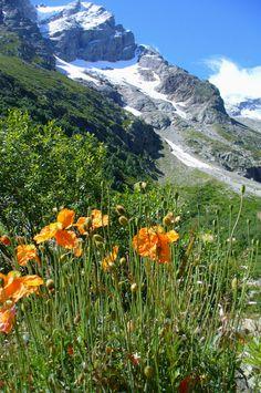 North Ossetia.