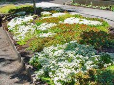 Low-Maintenance Plants and Dwarf Shrubs | DIY Lawn And Garden, Garden Tips, Garden Ideas, Hillside Garden, Sloped Garden, Patio Ideas, Garden Inspiration, Low Maintenance Plants, High Maintenance