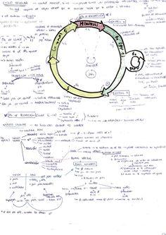 Inauguro tablero de materiales elaborados por #janoclase con este de @argan_4   , Olatz, sobre el ciclo celular y el núcleo. Es un esquema-diagrama que ella hace durante su estudio y que le servirá de material de repaso. Ventaja: está todo. Tal vez se podía haber hecho en dos páginas, pero eso depende de gustos.