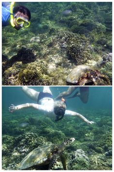 Turtle point - Gili Meno