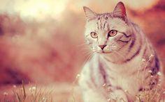 I gatti di San Bonaventura