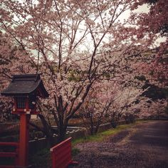 missing the blossoms during the winter