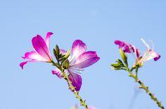 Close Up, Nature, Plants, Naturaleza, Plant, Nature Illustration, Off Grid, Planets, Natural
