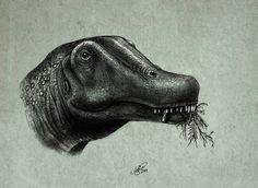 dreadnoughtus_schrani_by_malvit-d7zql0e.jpg (1024×747)