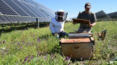 Using the space around the solar panels as sites for 48 hives, the Eagle Point solar farm is using its land to save pollinators and help local agriculture.