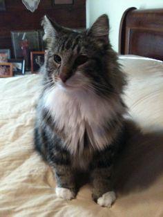 Kruse Kats: Meet Kenzu, Our New Brother