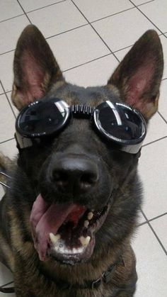 That's one cool K9! Mr. Warner of the Springfield, MA. Police Department is sporting his doggles. Thanks to his partner, Officer Eric Blair for this awesome photo. Have a good weekend Officers!