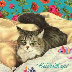 Beterschapskaart met gestreepte kat tussen dekens- Greetz