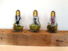 Terrarium Lightbulb Trio - 3 Air Plants in 3 Light Bulb Terrariums. $39.00, via Etsy. Light Bulb Terrarium, Air Plant Terrarium, Terrarium Ideas, Air Plants, Indoor Plants, Last Minute Christmas Gifts, Gnome Garden, Bright, Make And Sell