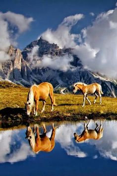 Beautiful horses!