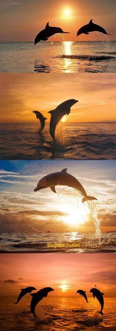 Dolphins Así me siento con More, FELIZ DE SER!!!