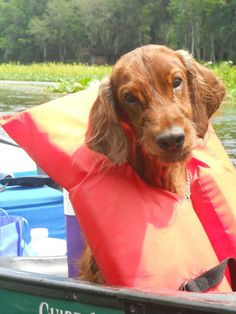 """""""Life is better with an Irish Setter!"""""""